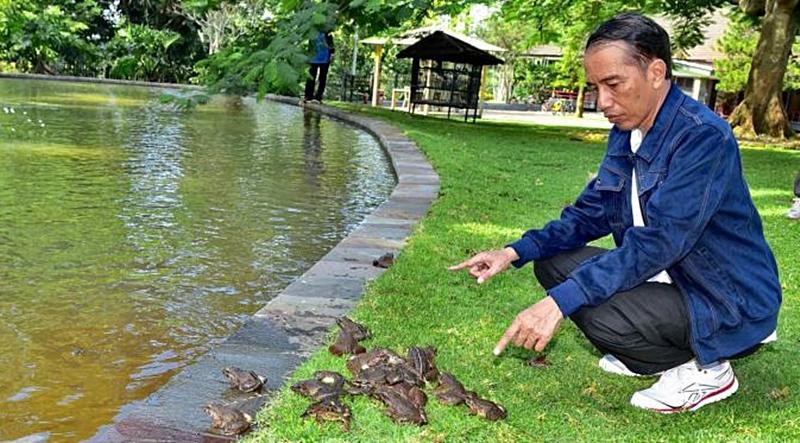 Sindir Megawati & Jokowi, Elite PD: Dia Sendiri yang Pelihara Kodok, Dia Juga yang Mempermasalahkan!