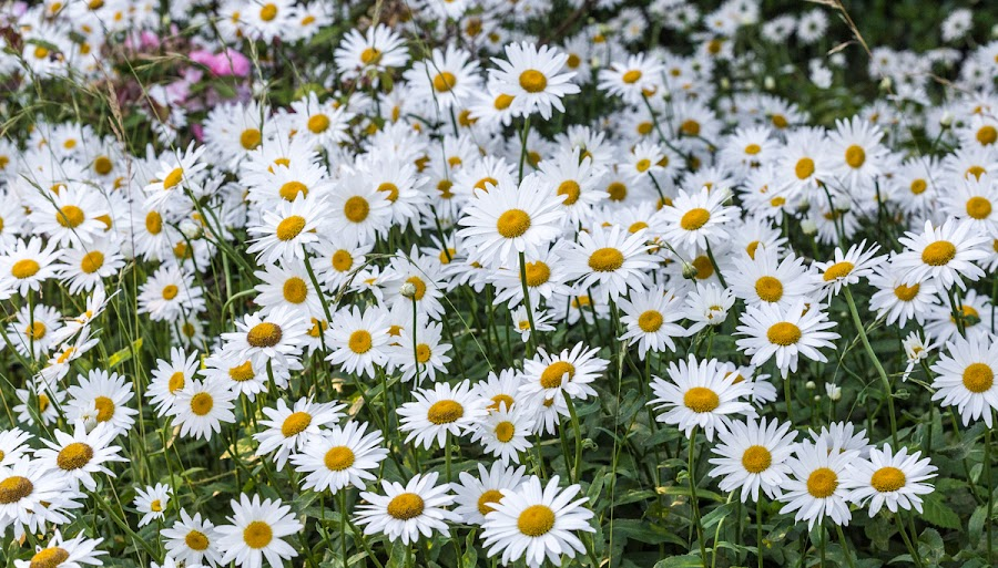 And speaking of daisies