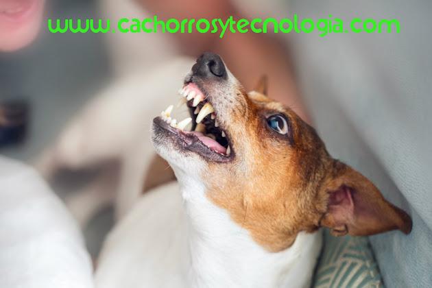 Esquizofrenia en perros dog mente perro puppy cachorros y tecnologia shurkonrad 2