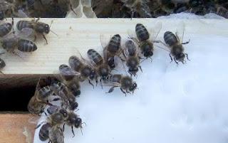 Ημερίδα Μελισσοκομίας στο Αγρίνιο από το ΕΠΙΛΕΚΤΟ και τον ΚΟΤΟΦΩΛΗ