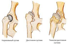 degradação óssea na displasia em cães