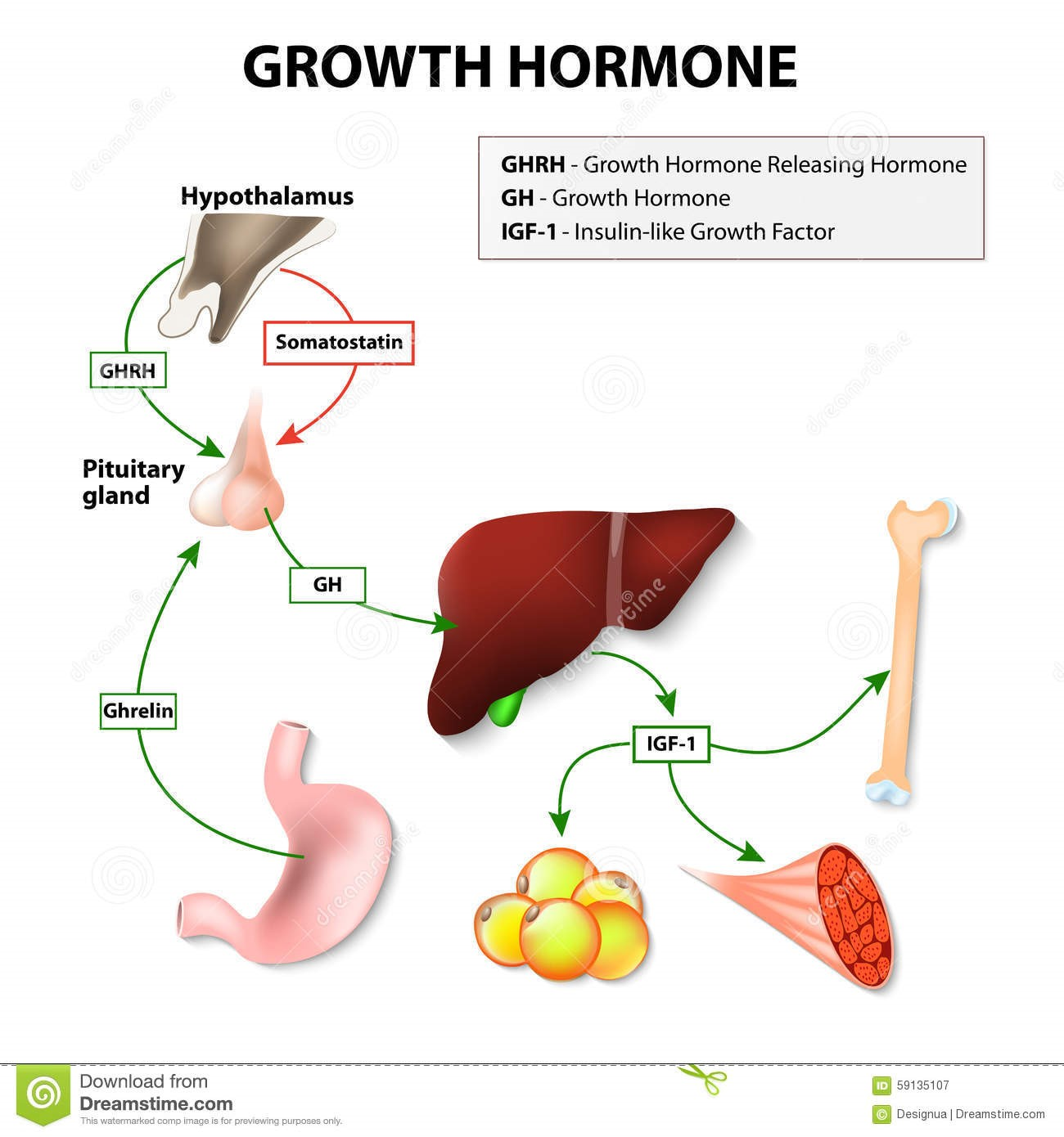 Hormon yg Kacau dan Pengaruhnya