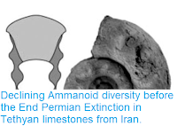 https://sciencythoughts.blogspot.com/2018/02/declining-ammanoid-diversity-before-end.html