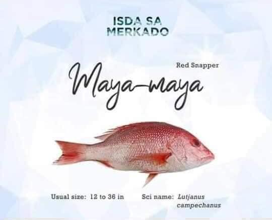 Isdang Maya-Maya (Red Snapper Fish)