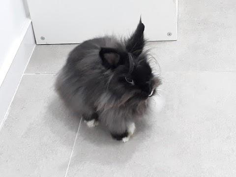 Tempi (conejo macho)