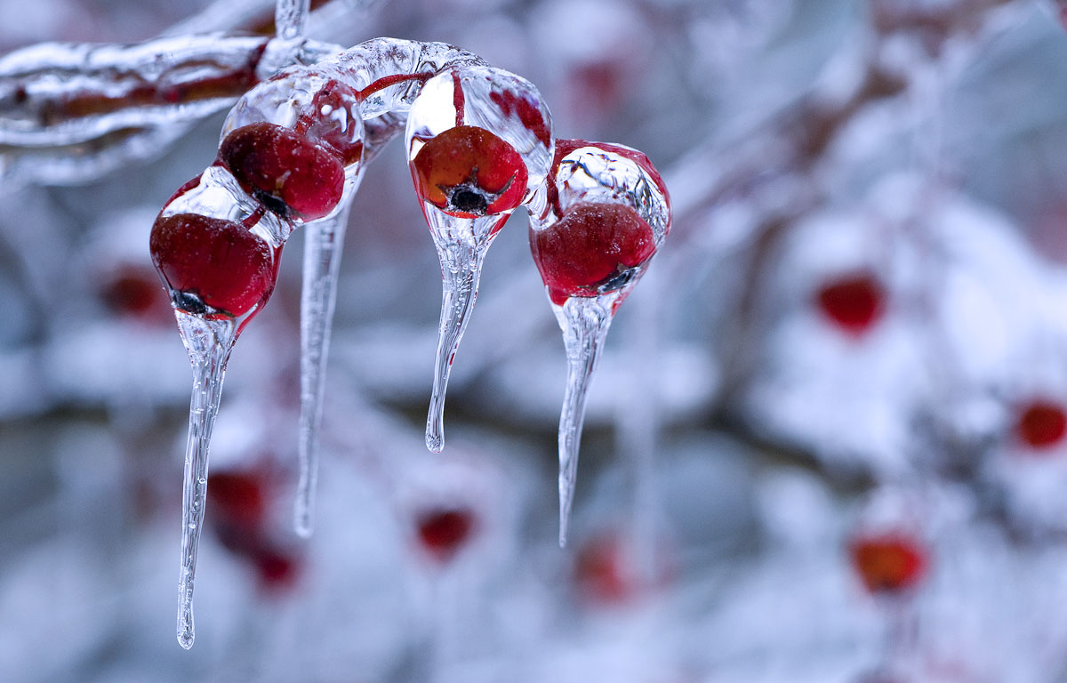 Hd Wallpapers 2012: Winter Nature Photography