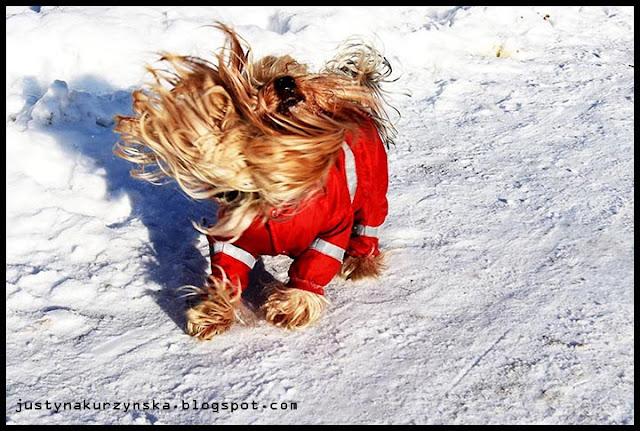 psie ubranka moga zdjęcia