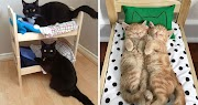 They buy Mini Beds For Their Cats just to get their love