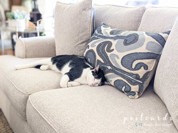 black and white kitty napping on sofa