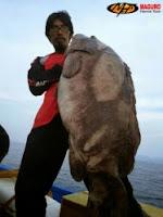 Teknik mancing ikan kerapu monster