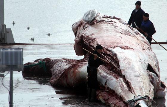 Island slutar jaga vikval