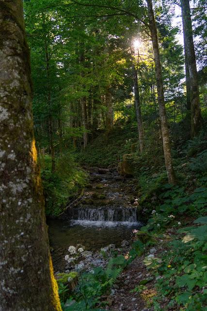 Almwanderung Inzell | Bergwald- Erlebnispfad - Frillensee - Steineralm 04