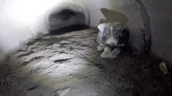 Молодые люди спасли щенка, который не мог выбраться из туннеля!