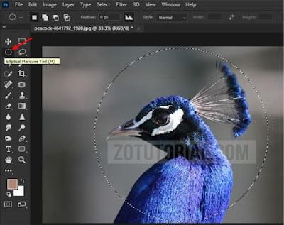 Cara Crop Foto Jadi Bulat di Photoshop Terbaru Lengkap Gambar