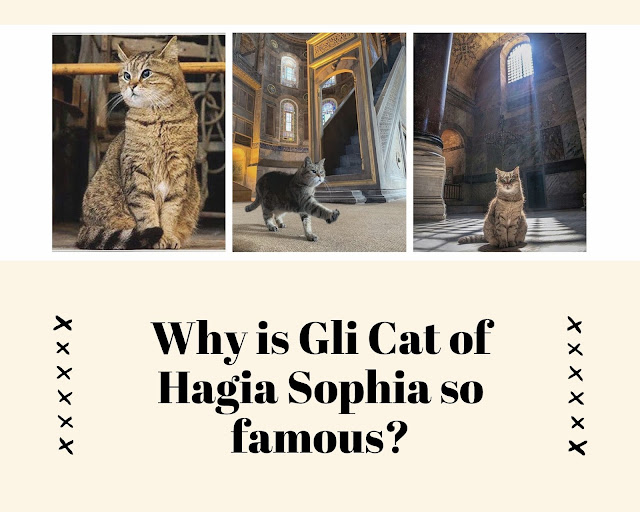 Why is Gli Cat of Hagia Sophia so famous?