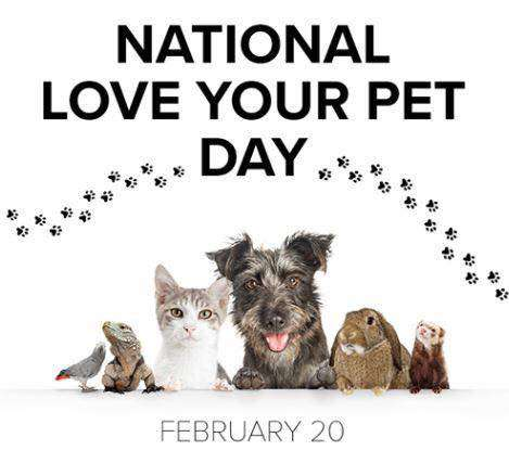 National Love Your Pet Day Wishes for Instagram