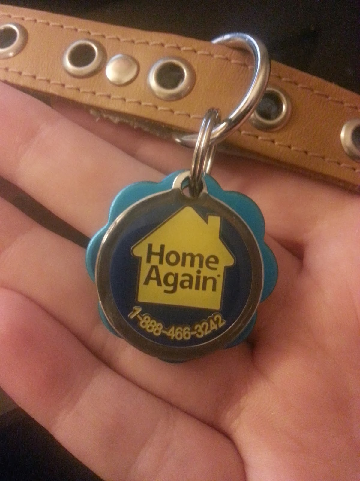 home again dog chip