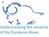 http://sciencythoughts.blogspot.com/2016/10/understanding-ancestry-of-european-bison.html