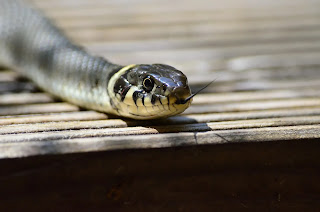 Entertainment: Nigerian celebrities react to claims that snake swallowed N36m in JAMB office