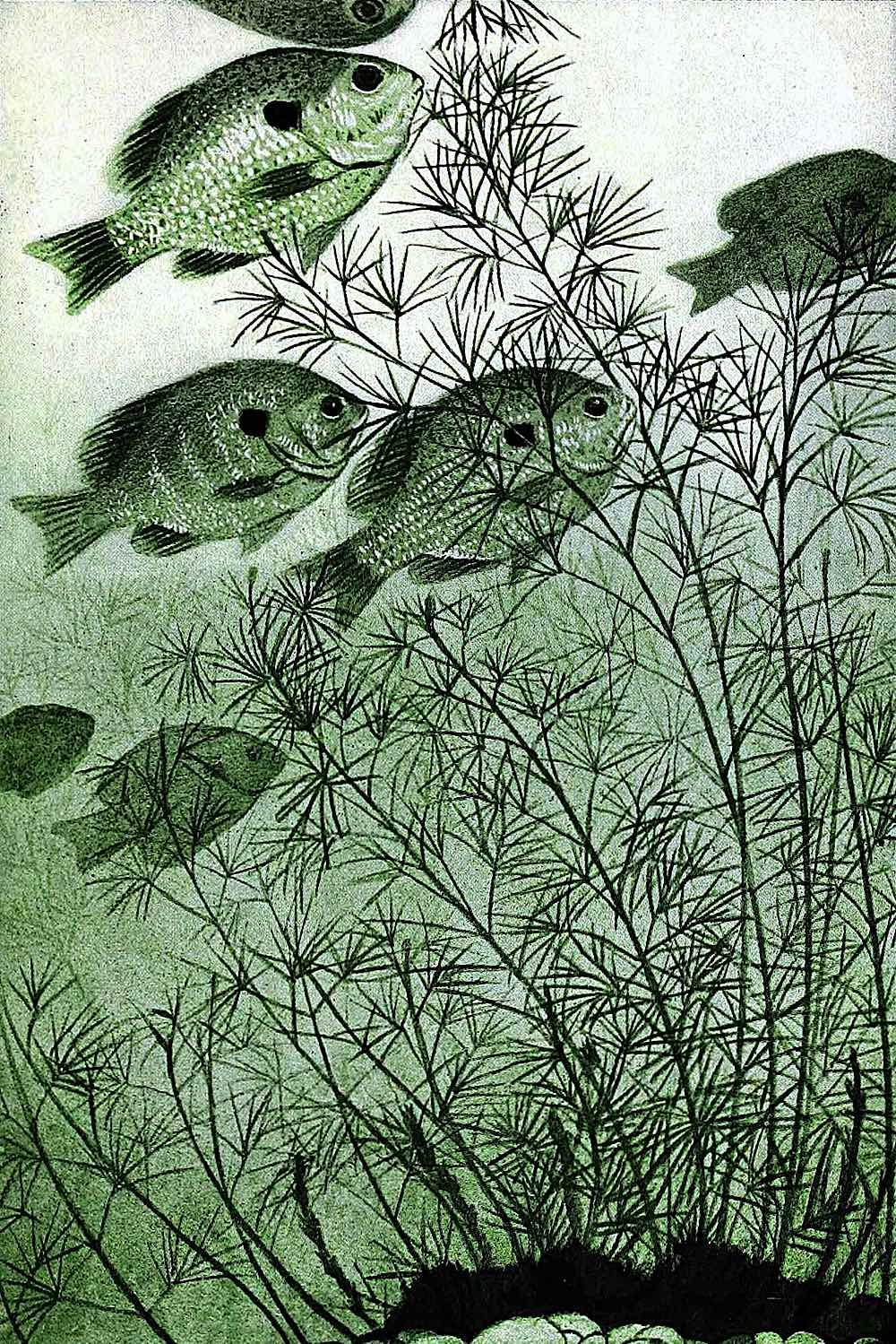 Walter King Stone fish underwater green