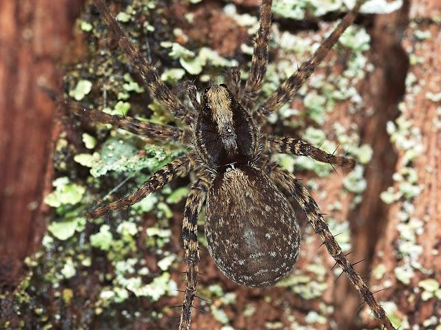 Wildlife-Makrobild einer Spinne