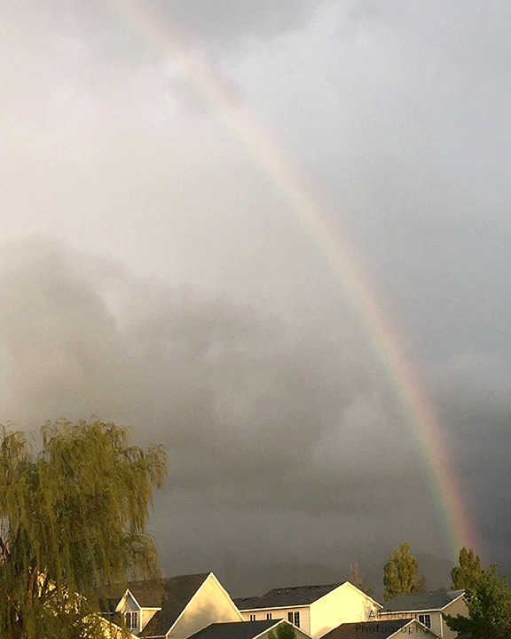 Rainbow over houses and weeping willow