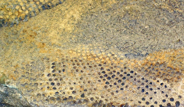Fossil Algae Reveal 500 Million Years of Climate Change