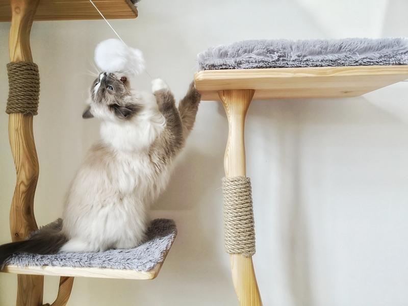 drapak dla kota, naturalny drapak, designerski drapak, ładny drapak dla kota, dobry drapak dla kota, drewniany drapak dla kota, jesionowy drapak, koci tester, kot testuje, mebel dla kota, kot warszawski