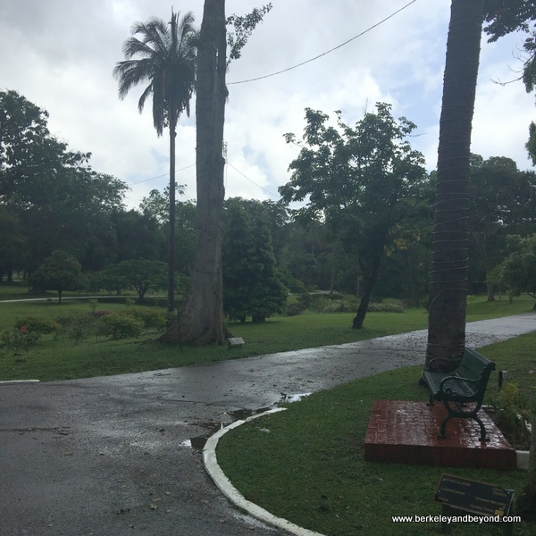 Royal Botanical Gardens in Queen's Park Savannah in Port of Spain, Trinidad
