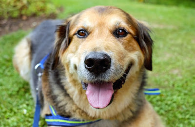 resiko memelihara anjing bagi kesehatan