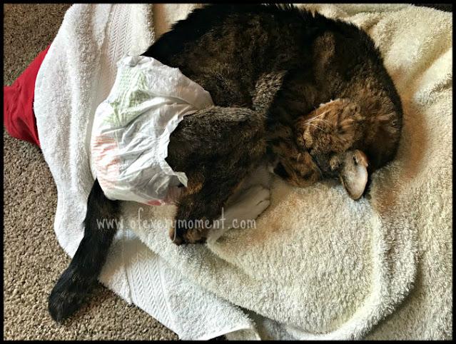 Kitty sleeping on a towel, wearing a diaper