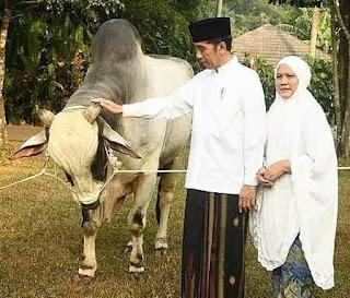 Idul Adha 1441 Hijriah,  Presiden Jokowi Kurban Sapi di 34 Provinsi