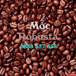 Cà phê Robusta mộc