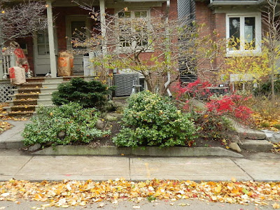 Riverdale Toronto Fall Cleanup Front Garden After by Paul Jung Gardening Services--a Toronto Gardening Services Company