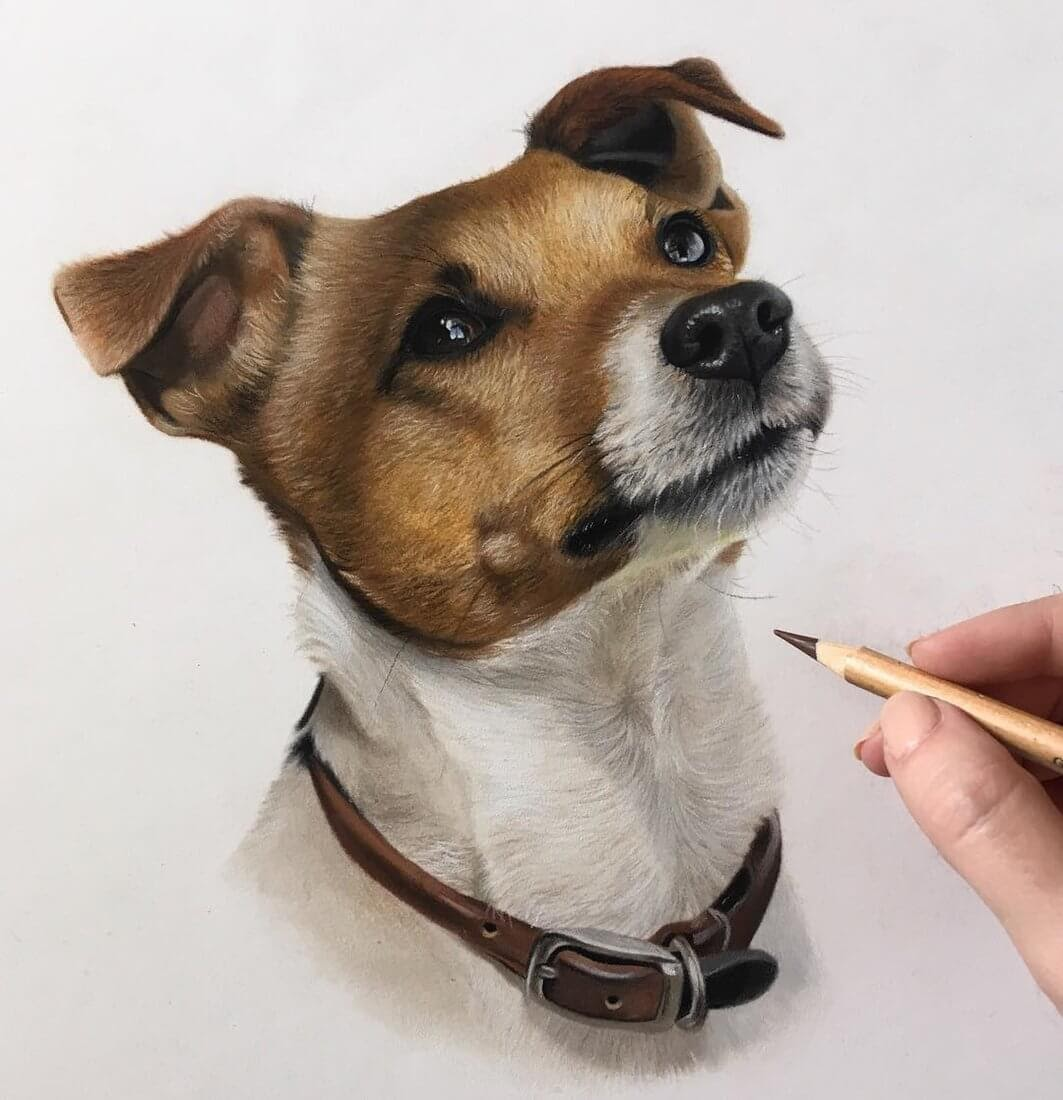 03-Stanley-the-Jack-Russell-Danielle-Fisher-Dog-Portraits-with-Pastel-Drawings-www-designstack-co
