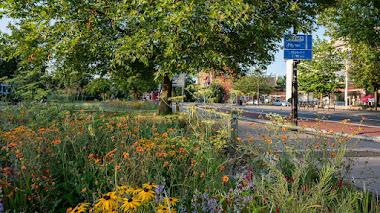 Jardín de lluvia urbano, drenaje sostenible con valor social y medioambiental
