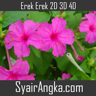 Erek Erek Bunga Pagi Sore 2D 3D 4D