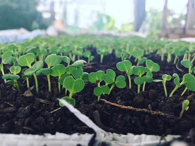 Peluang usaha sayur organik