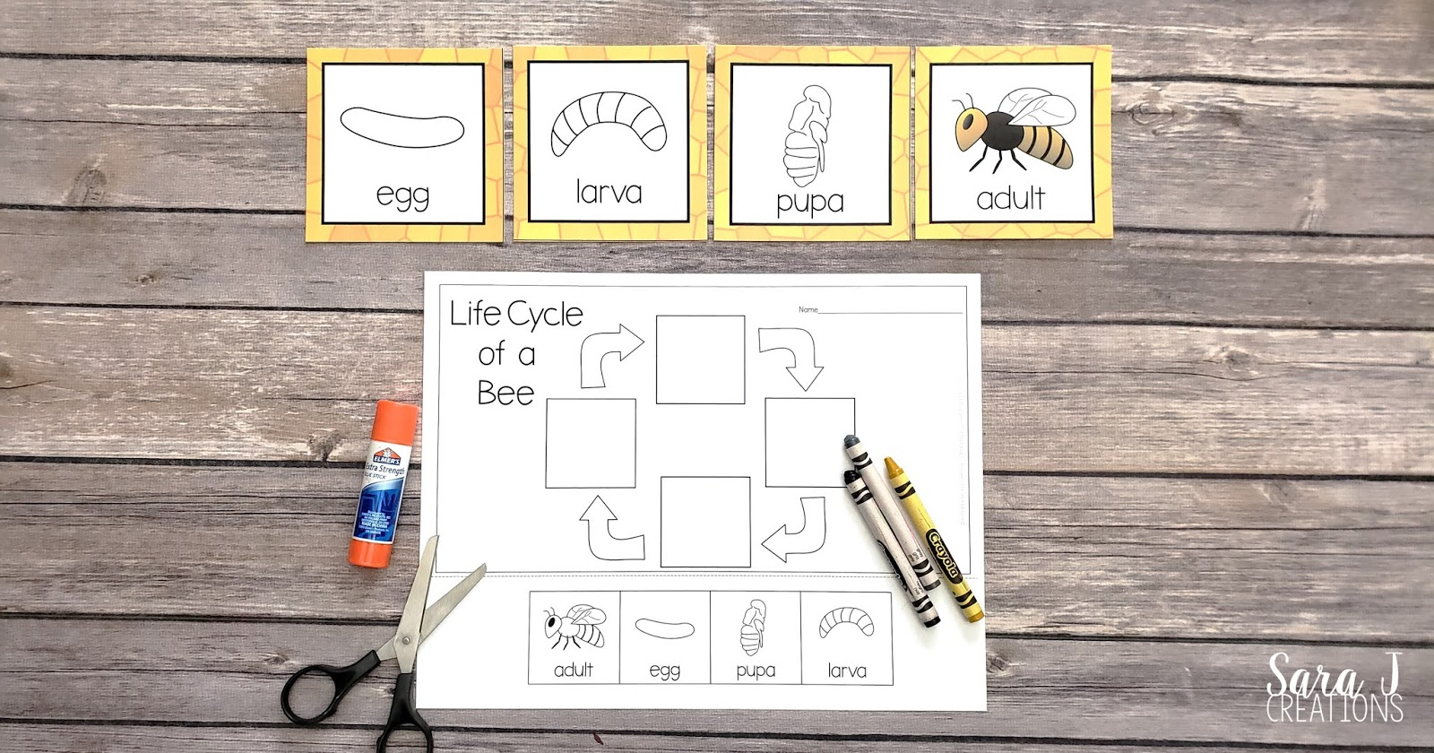 Learn about the life cycle of a bee with these free printables! Practice sequencing the life cycle with these cards and then complete a cut and glue activity.