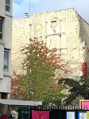 Pinkish green vine on stone walls of buildings in Paris