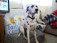 dalmatain dog posing with bags of dog food