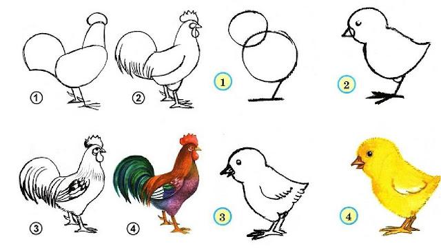aprende a dibujar un gallina, aprende a dibujar pollito, para niños