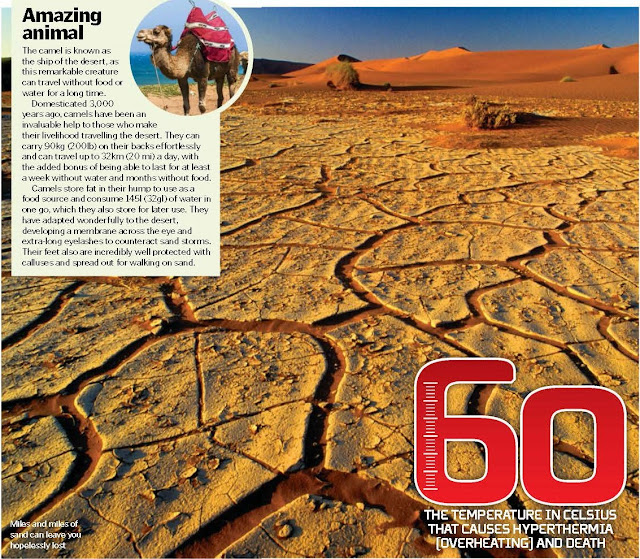 Escape Scorching Heat, How to survive the extreme temperatures of the desert