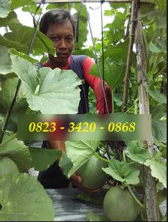 AGEN NASA DI Kuala, Langkat - TELF 082334020868