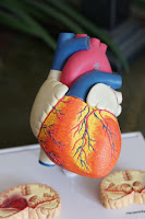 3D Heart Printing – A new leap for Organ Transplant