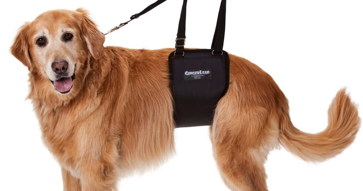 Adjusting A Dog Collar Sling