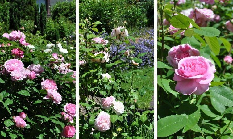 Ökologisch wertvoller Garten