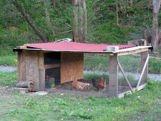 chickens near Caretta WV