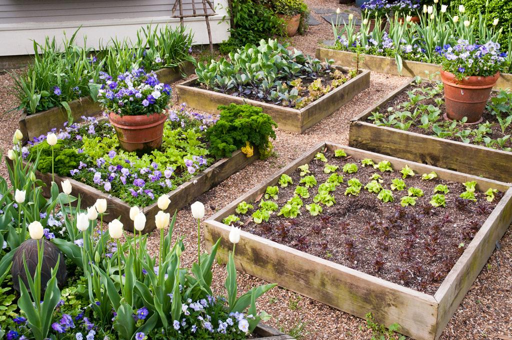 Above Ground Garden Beds