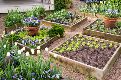 Above Ground Vegetable Garden Success Tips